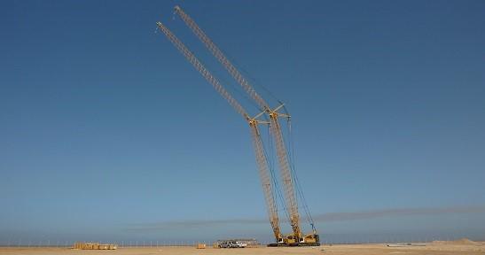 Saudi Cranes - Welcome Page